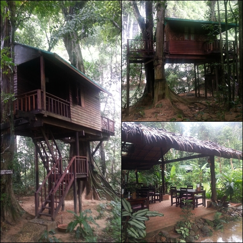 Nuestro alojamiento en Our Jungle House