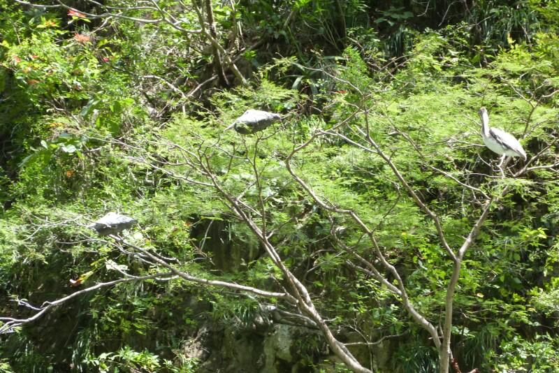 Aves en el cañón