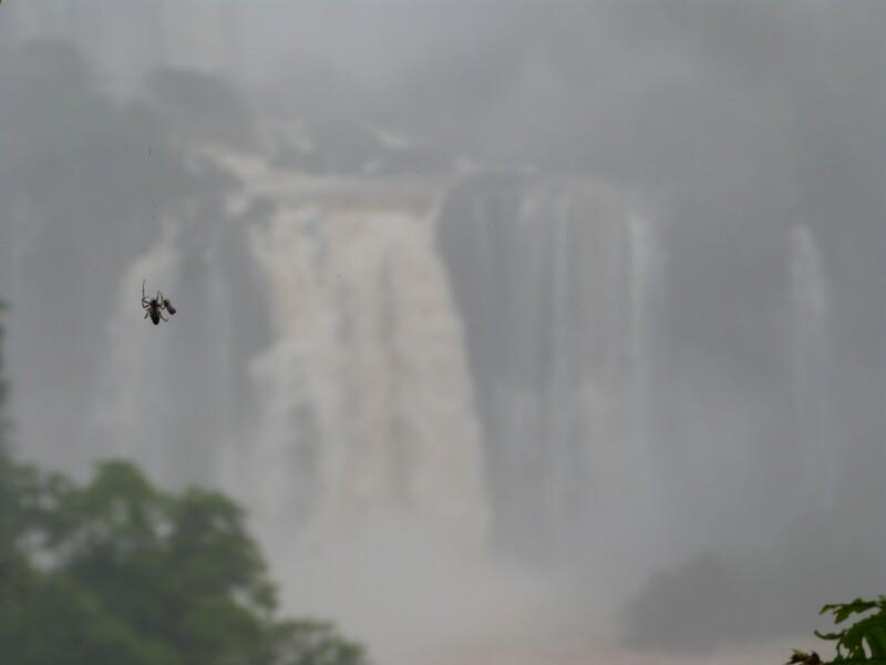 Naturaleza en Iguazú