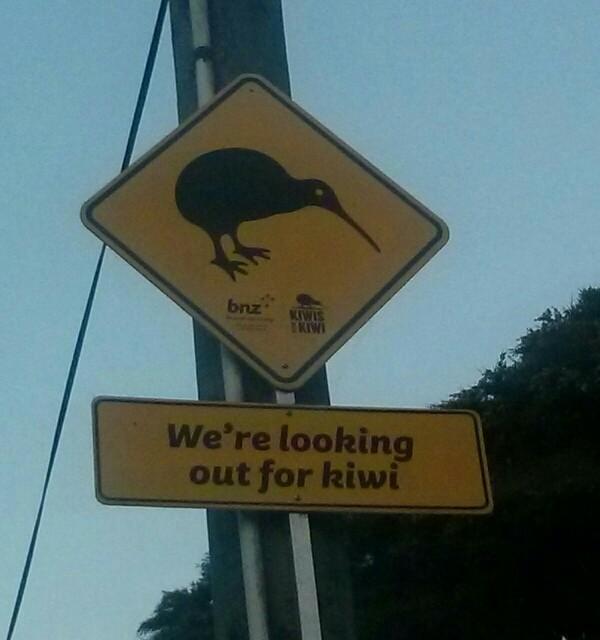 Kiwis en Coromandel