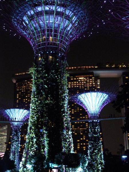 Los súper árboles de noche