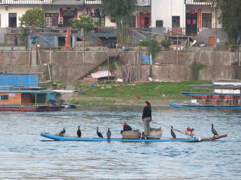 China tradicional con la pesca con cormorán