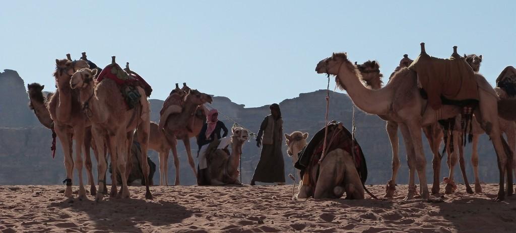 Beduinos, camellos en Wadi Rum