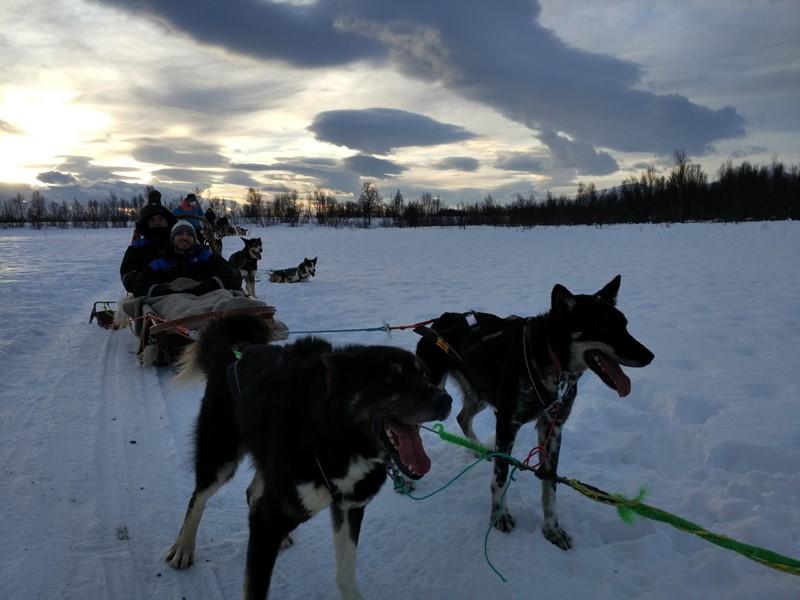 En el trineo de perros de Tromso
