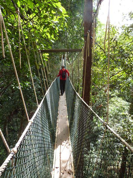 Caminando por los puentes colgantes de Taman Negara