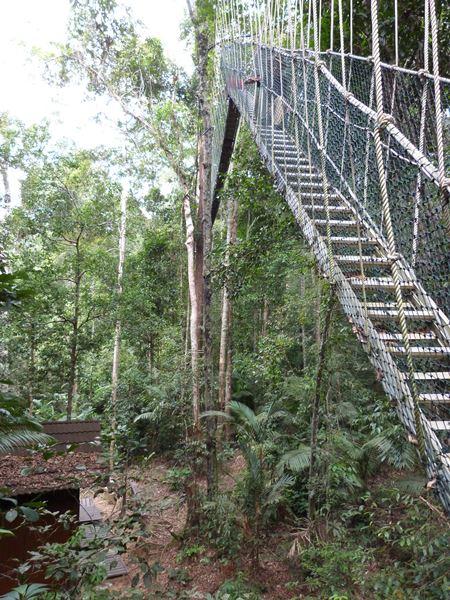 Descenso de los puentes en Taman Negara
