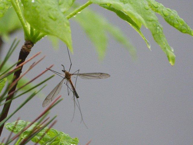 Insecto en Zhangjiajie