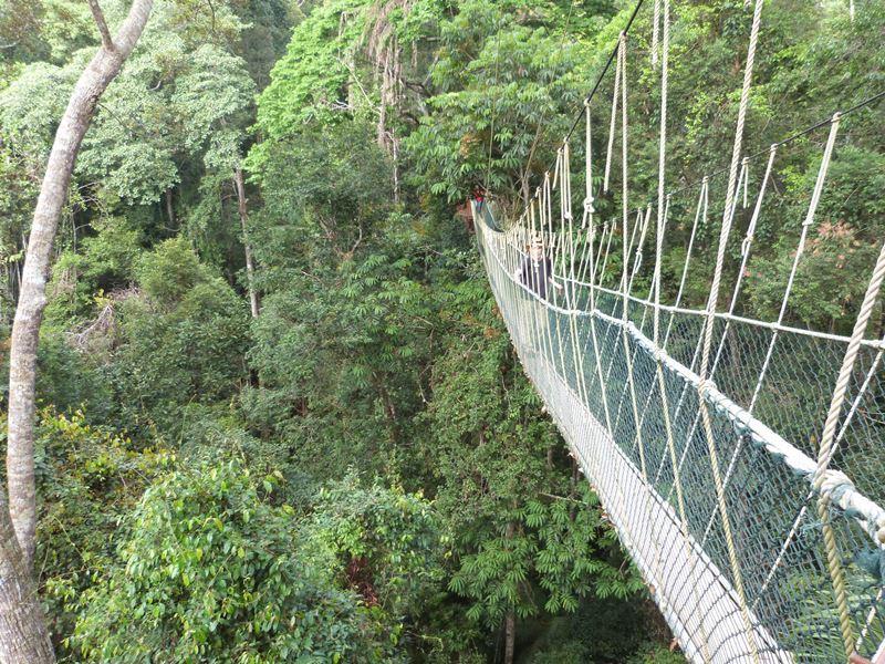 Dos días en Taman Negara: la selva tropical de Malasia