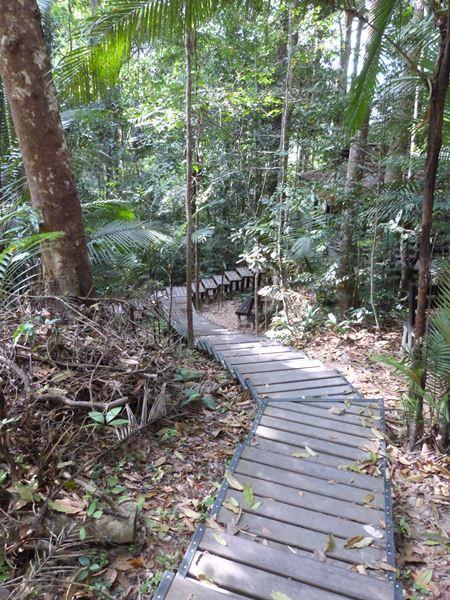 Sendero en Taman Negara