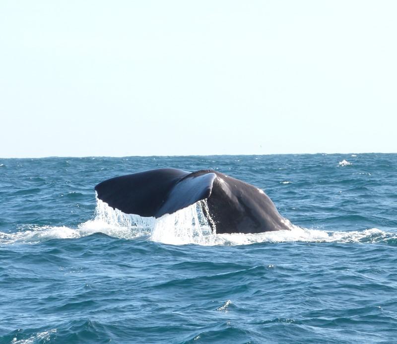 Ballenas en Nueva Zelanda