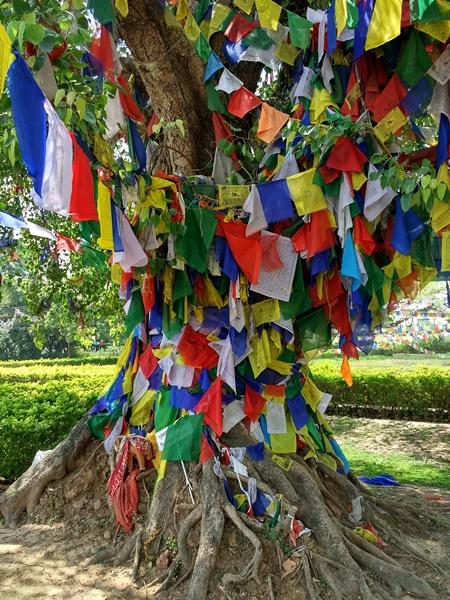 Árbol en Lumbini con decoración budista