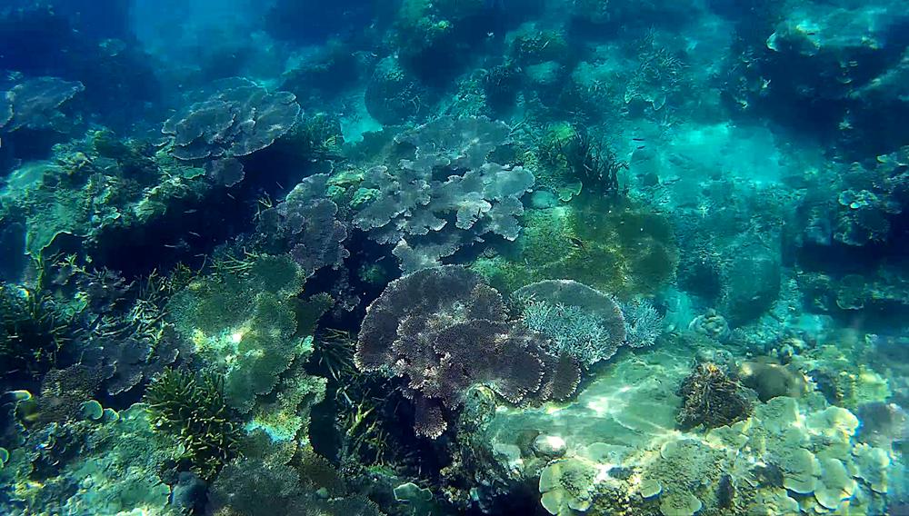 Fondo marino en Perhentian