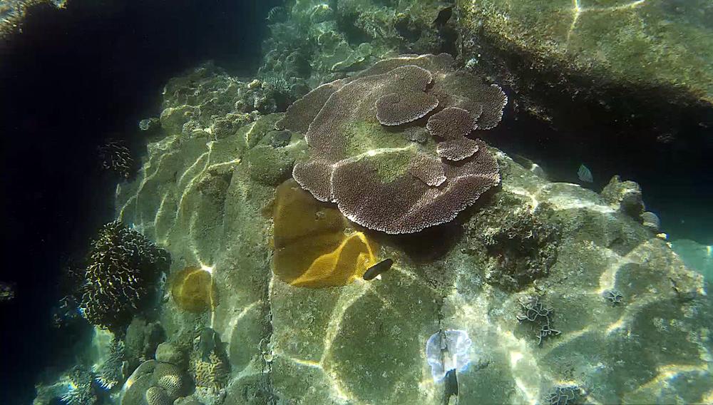 Detalles del fondo desde el kayak