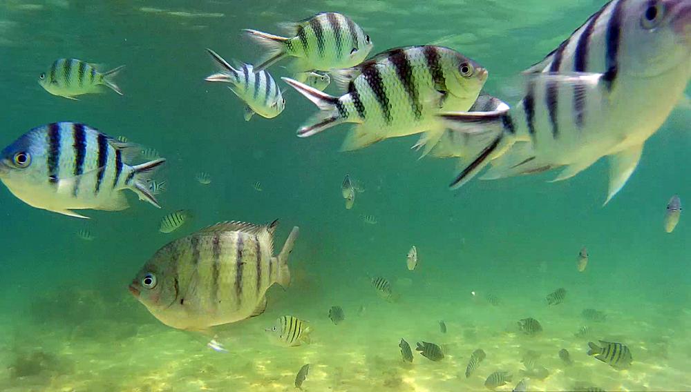 Fondo marino de Kapas