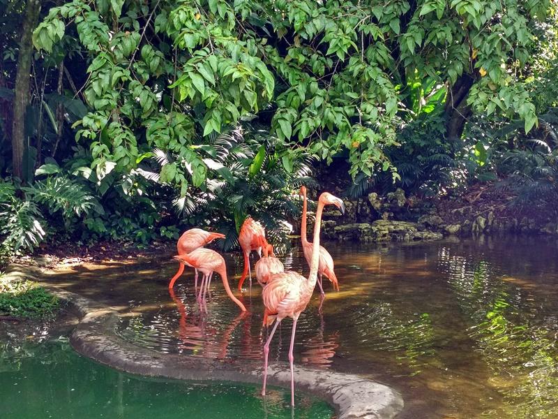 Flamencos rosas en Palenque